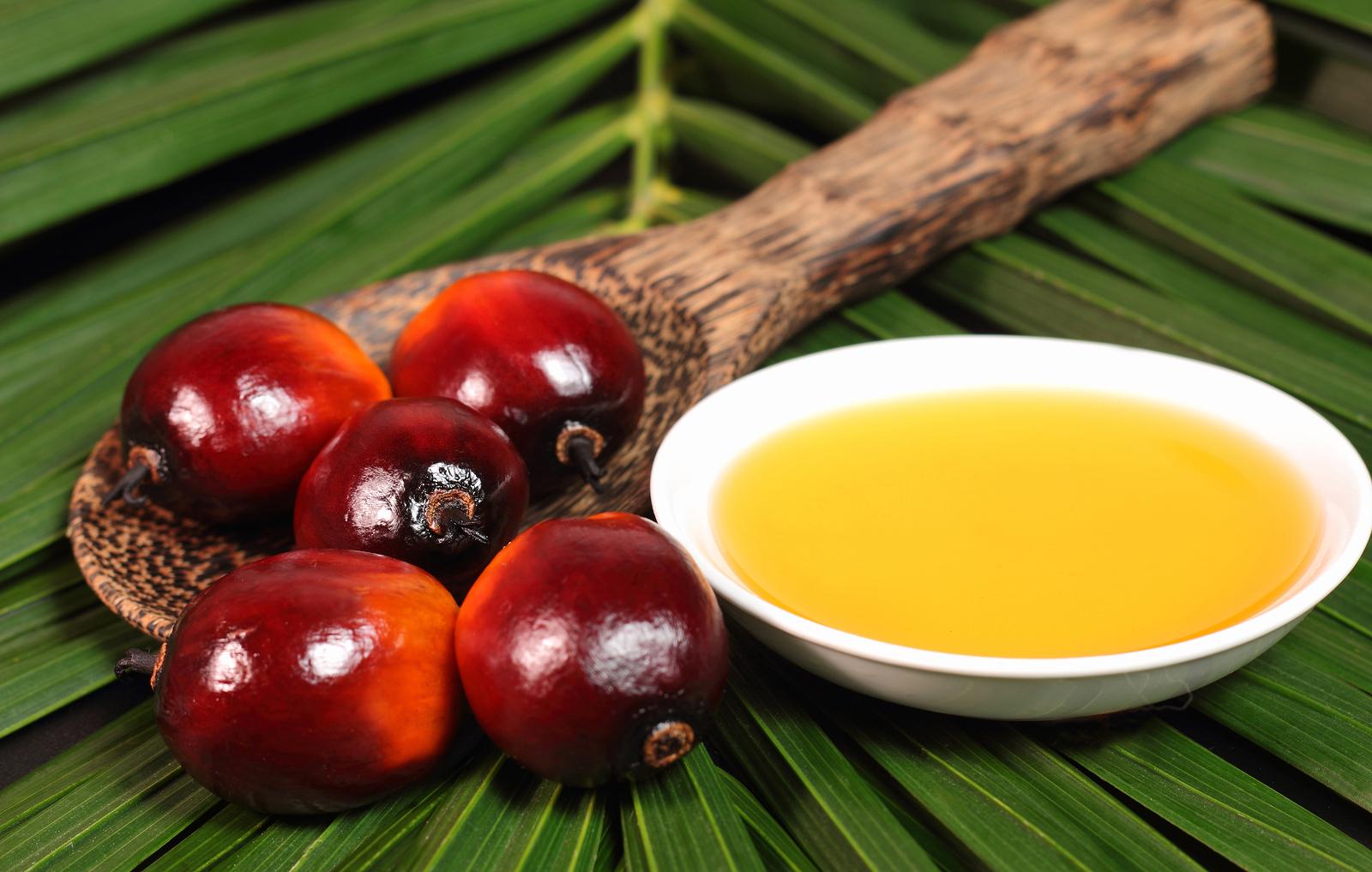 Palm Oil Global Biologics Industries S L